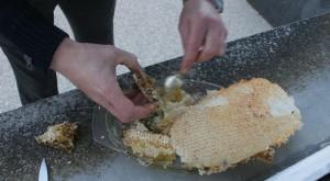 récupérer-le-miel
