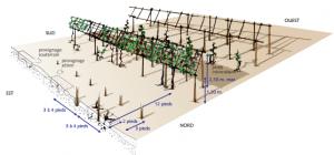 Plantations antiques méthode ©J.-P Garcia