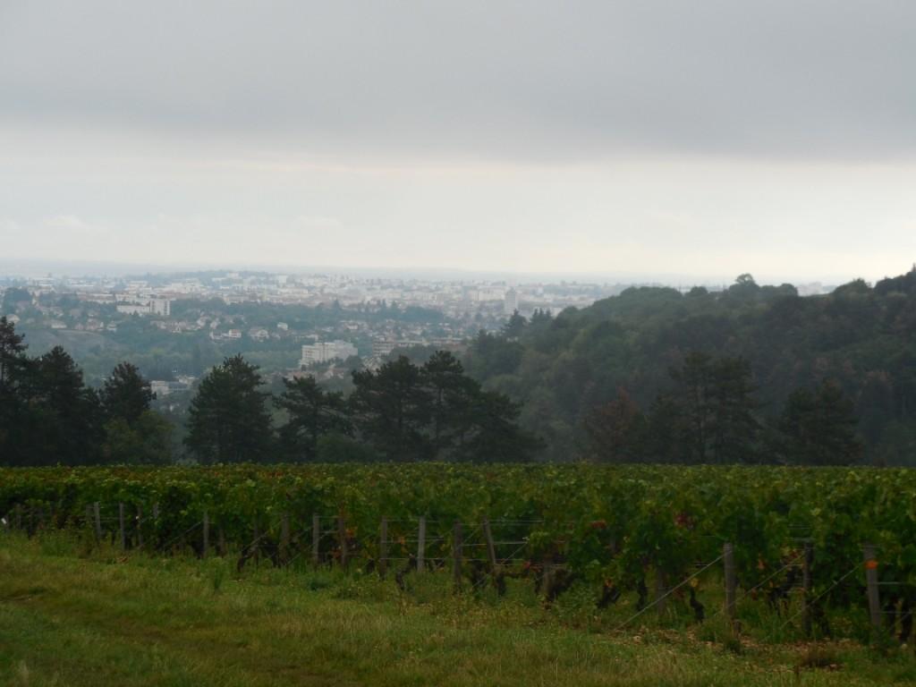 les-vignes-format-paysage