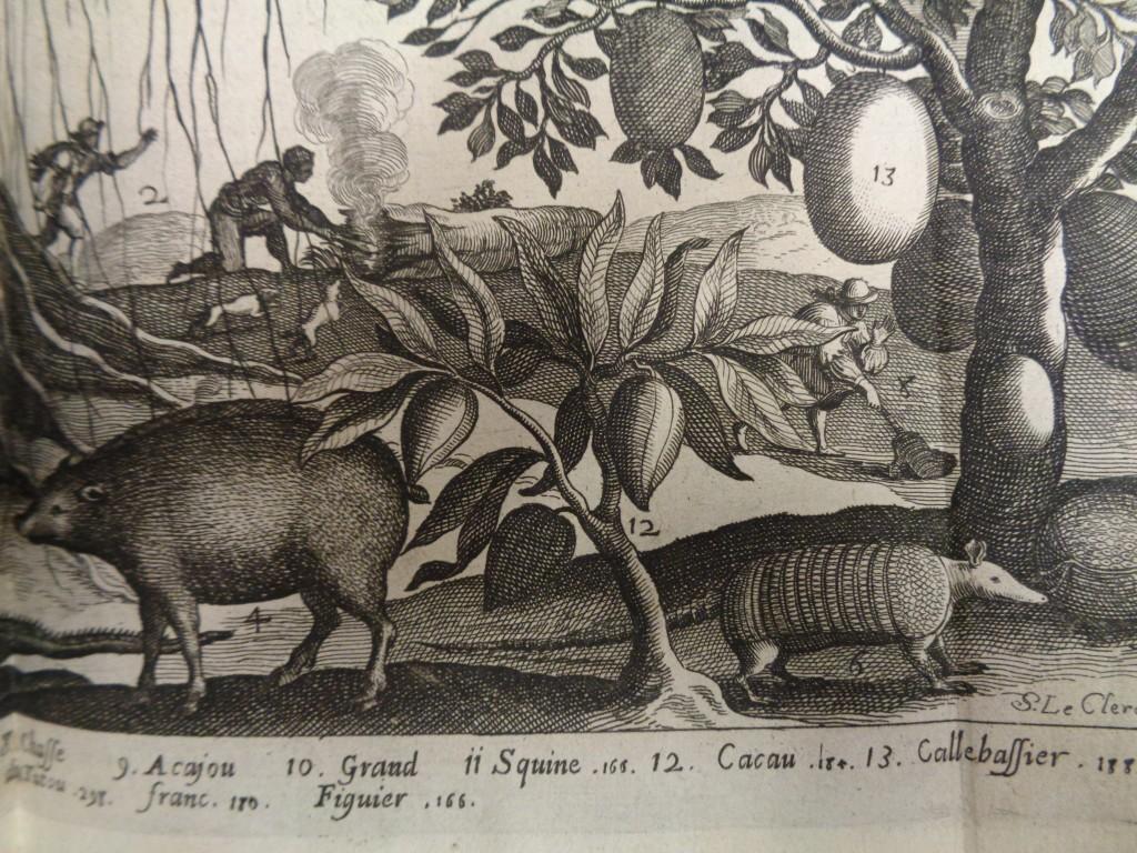 Histoire generale des Antilles, Cacau, 1667-1671, D.15585
