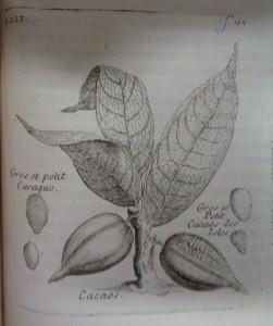 Histoire generale des drogues, 1735, cote 17887 p 234 (2)